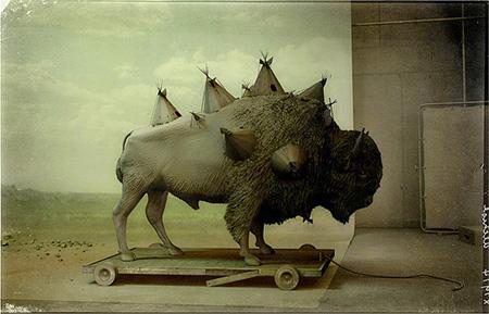 3D-бизон на фоне имитации настоящей фото студии