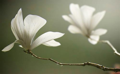 Нежный реалистичный 3D цветок
