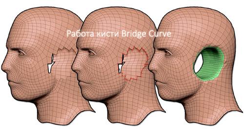 Работа кисти Bridge Curve в ZBrush 4R6