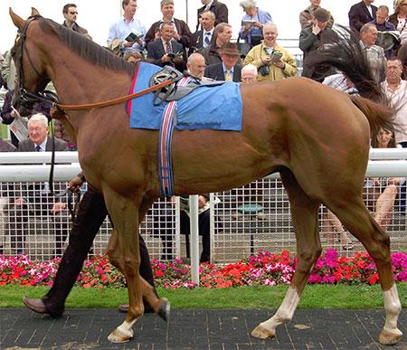 Референс лошади
