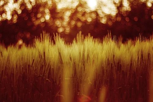 Кружки рассеивания, эффект боке на фотографии