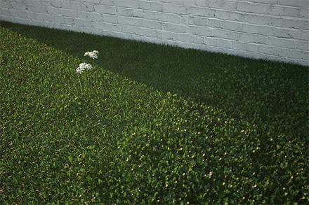 Фотореалистичный трехмерный клевер в 3ds Max + Vray