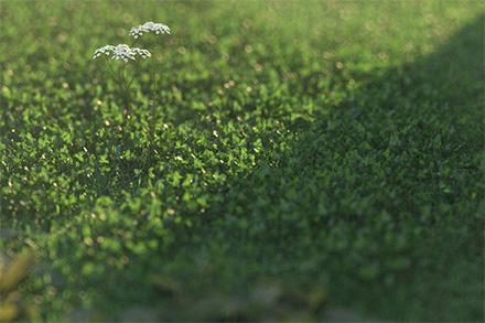 Реалистичная vray трава и клевер в 3ds max