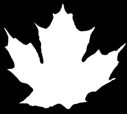 Текстура прозрачности листка