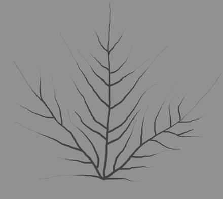 Текстура прожилок на листке