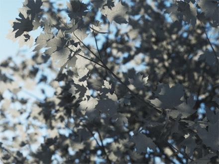 Рендер листьев с текстурой прожилок в слоте Translucency