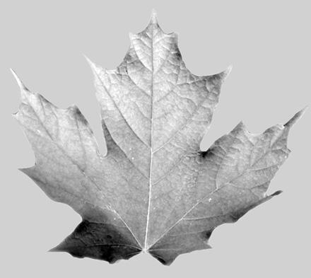 Текстура отражений листка (слот Reflect)