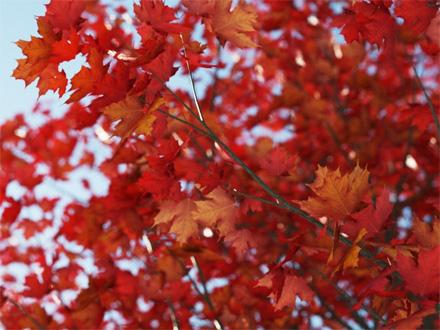 Рендер листьев только с верхним материалом и без просвечивания