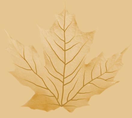 Текстура нижней поверхности листка (слот Back material)