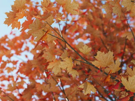 Рендер листьев со всеми материалами кроме слота Translucency